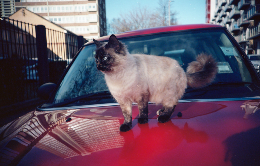 Ektar Kitty Scan